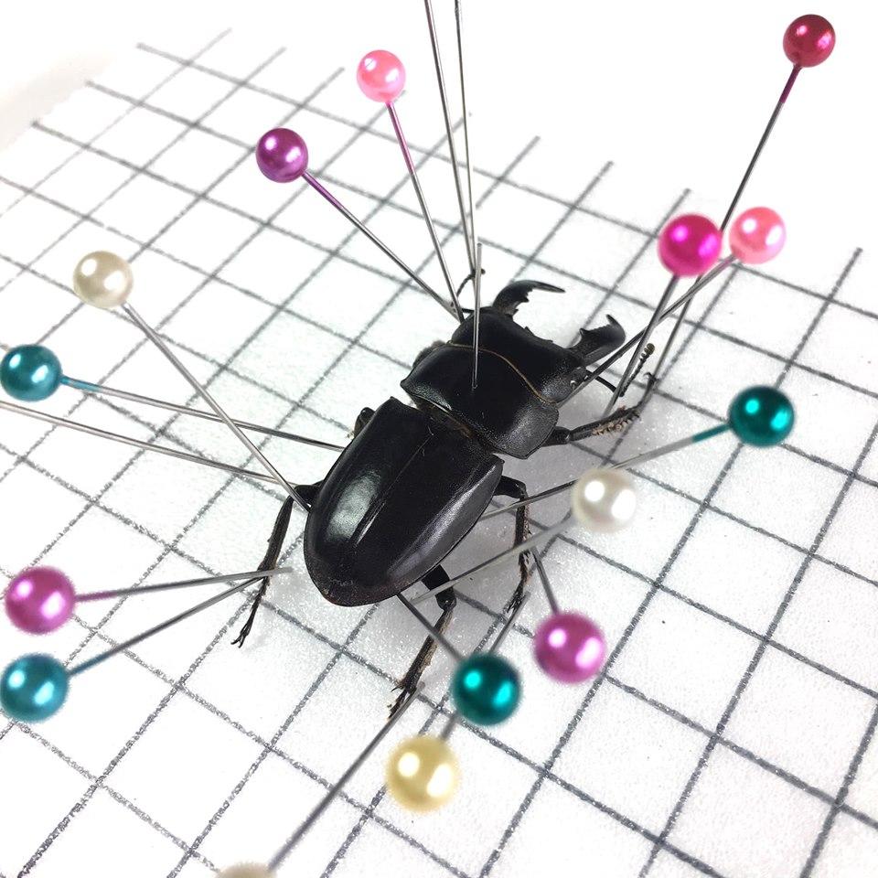 昆蟲標本製作